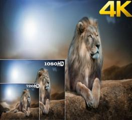 6 Máy chiếu phim Full HD giá rẻ, tốt nhất cho Gia Đình